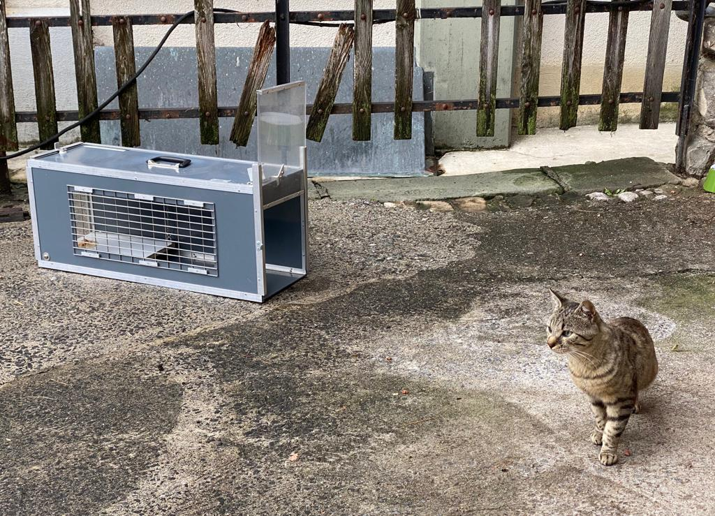 Eine wilde Katze soll mittels Katzenfalle eingefangen werden