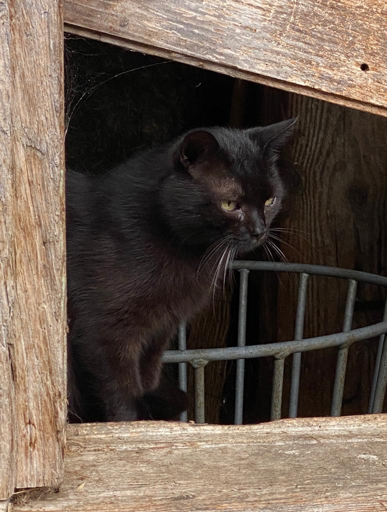 Eine schwarze Katze beobachtet aus der Ferne