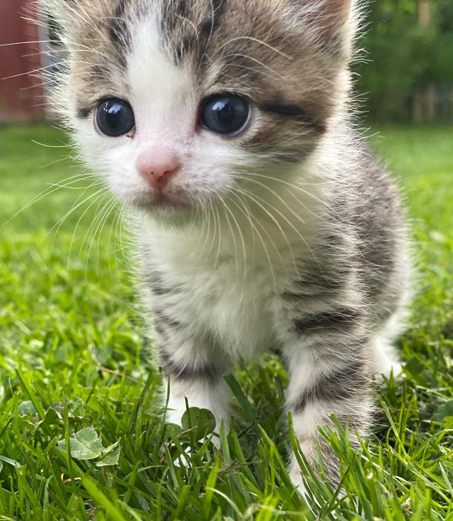 Katzenbaby erkundet neugierig seine Umgebung