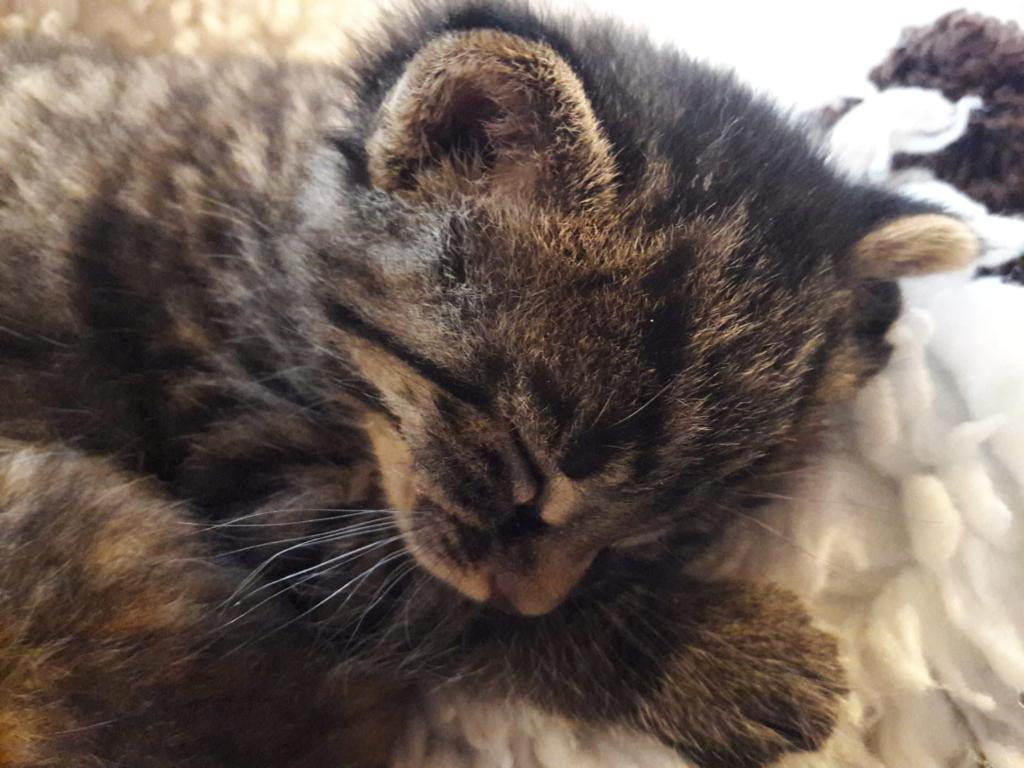 Süsses Katzenbaby schläft friedlich